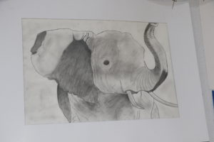 Pencil drawn picture of Elephant
